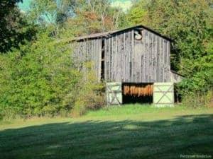 tobacco barn for drying tobacco plants
