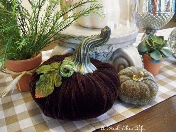 velvet pumpkins a stroll through life