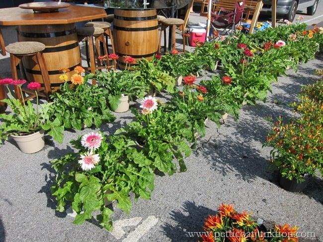 colorful flowers Nashville Flea Market