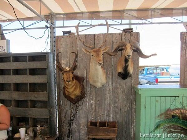 stuffed animal heads Nashville Flea Market Bucket List Petticoat Junktion