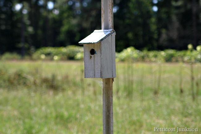 birdhouse Petticoat Junktion