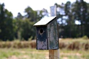 dads-handmade-homemade-birdhouses-Petticoat-Junktion.jpg