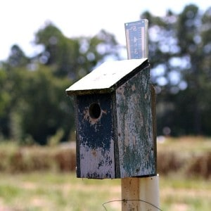 The Birdhouses My Dad Built | A Farm Story
