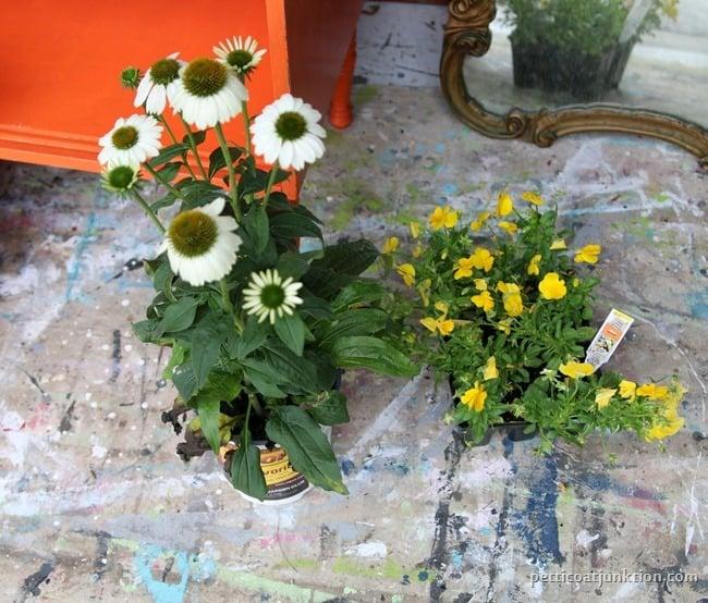 flowers for pot Petticoat Junktion