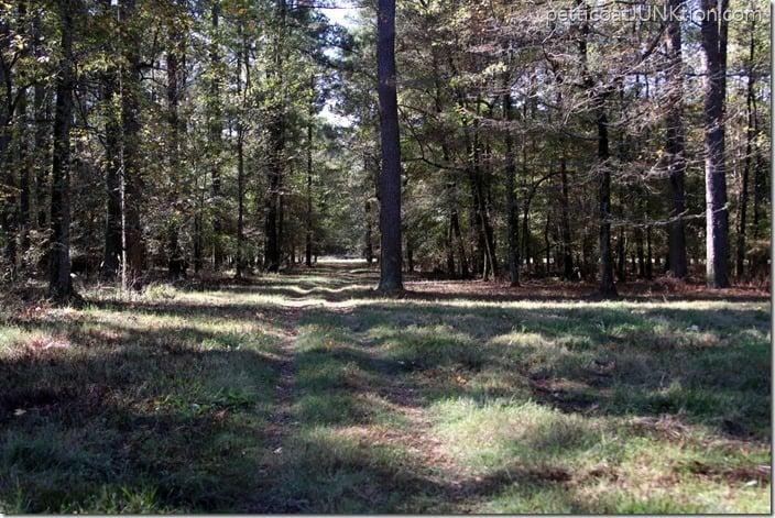 wood trails