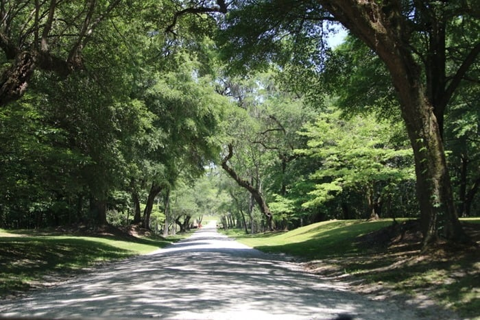 Drayton Hall Drive