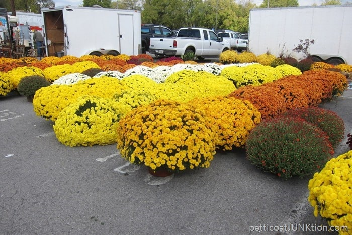 giant mums at the Nashville Flea Market