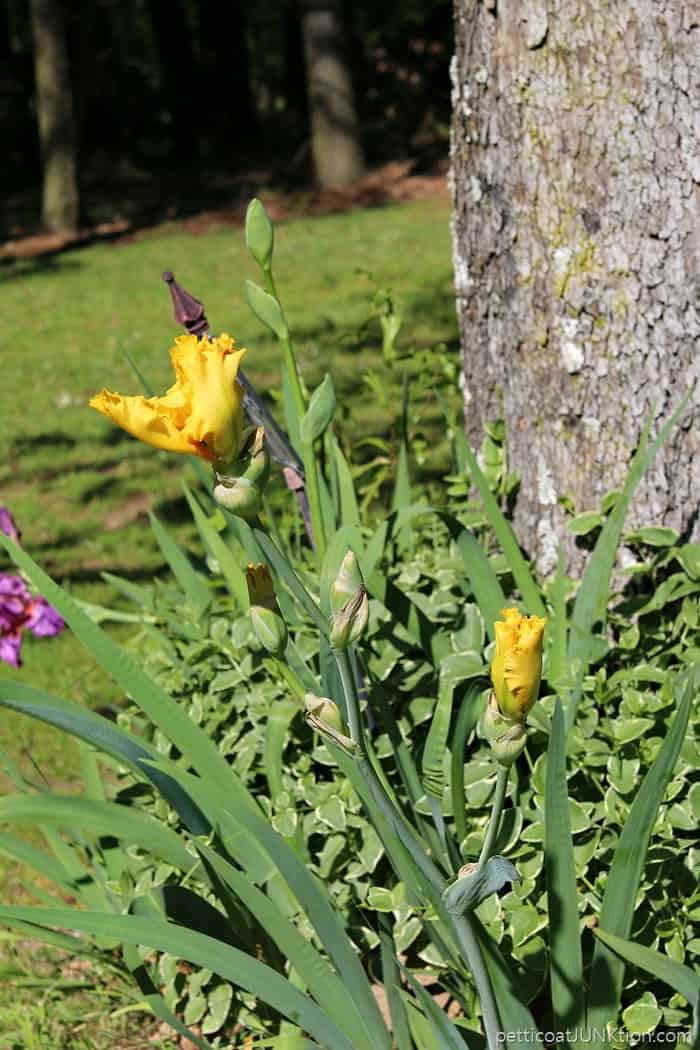Spring flowers blooming in the yard