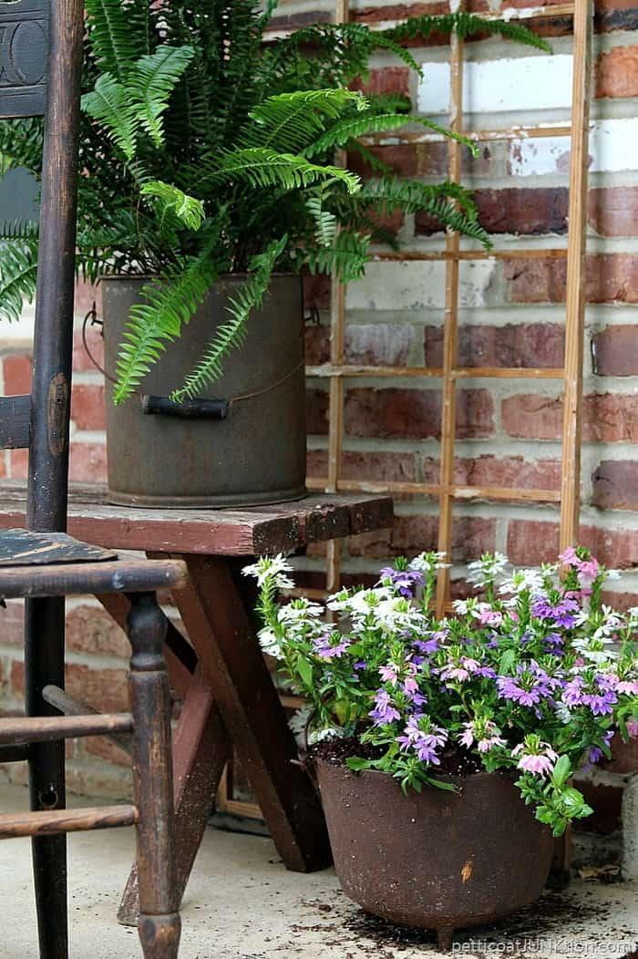 fern in reclaimed bucket