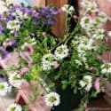 rusty containers and pretty flowers for the porch