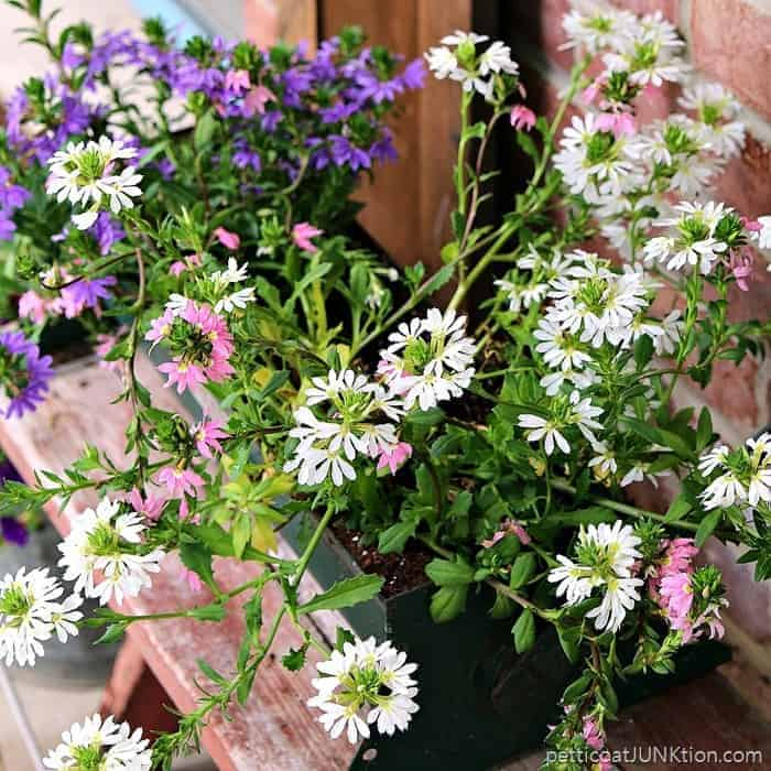 rusty containers for flowers