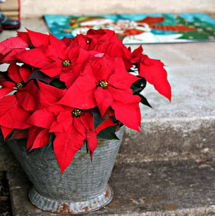 red poinsettias decoration for Christmas porch ideas