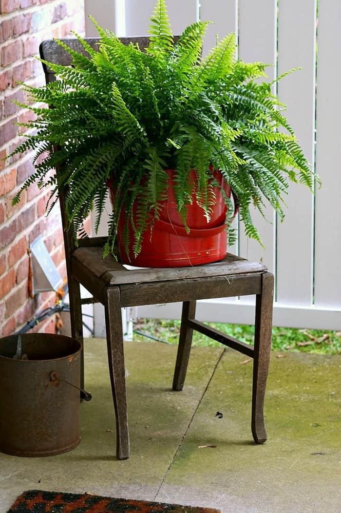 fern in wood bucket