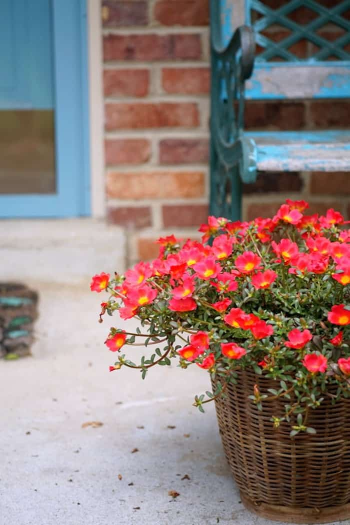 front porch flowers in basket