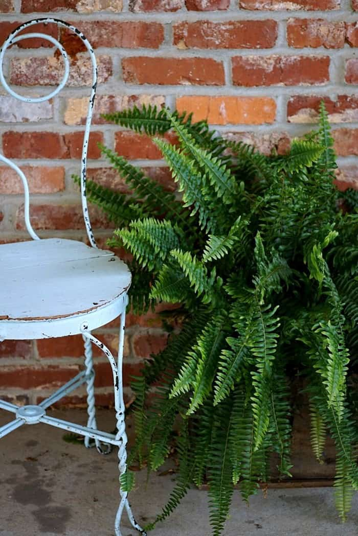 ice cream parlour chair and fern in reclaimed wood box