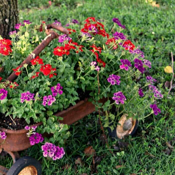 red and purple flowers in rusty wagon makes a beautiful Summer display