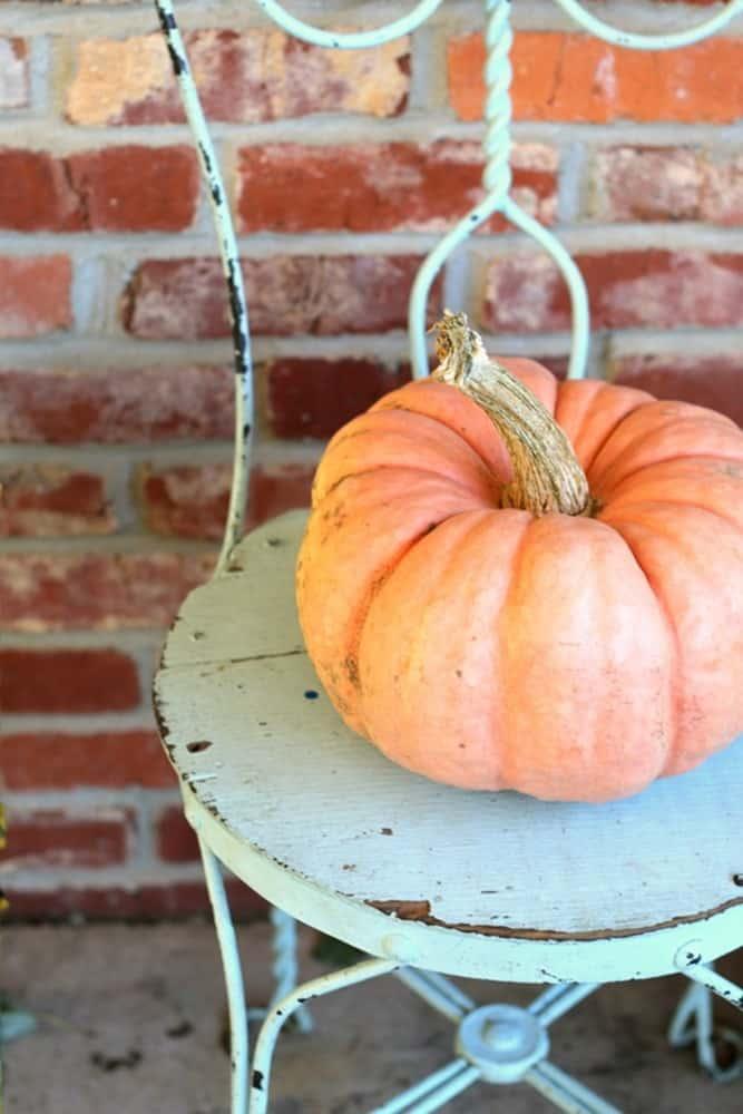 pretty soft orange pumpkin