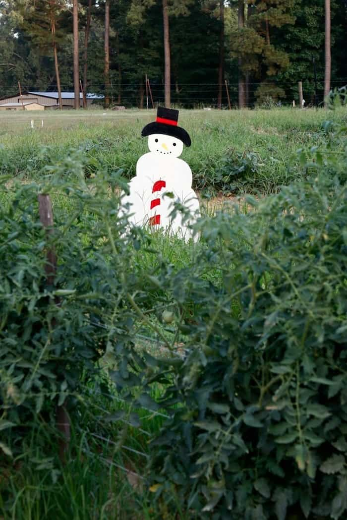 My Dad uses Snowmen as Scarecrows in his Arkansas garden