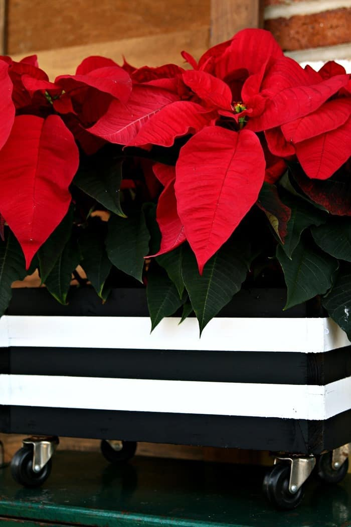 painted wood planter with black and white stripes