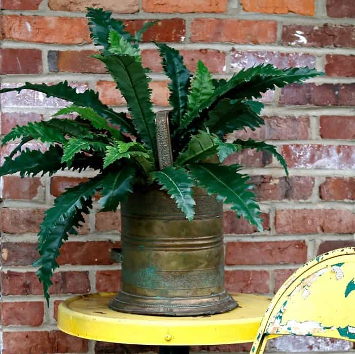 Use a Brass coal scuttle as a plant container