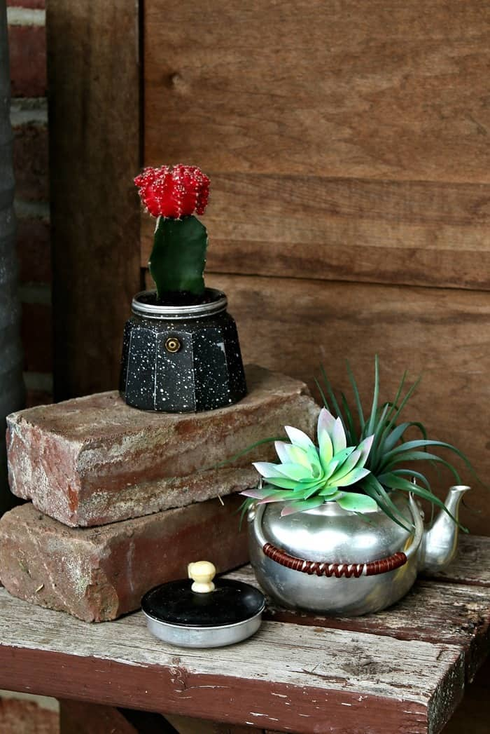 succulent plants in thrift store teapots for plant containers