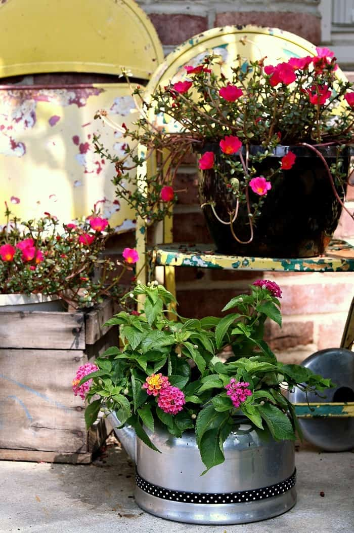 thrift store teapots make great flower pots