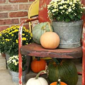 Buckets of Mums And Plenty of Pumpkins for Fall decorating