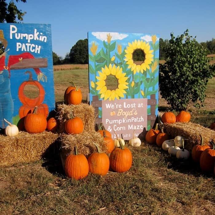 Pumpkin Patch Scenes