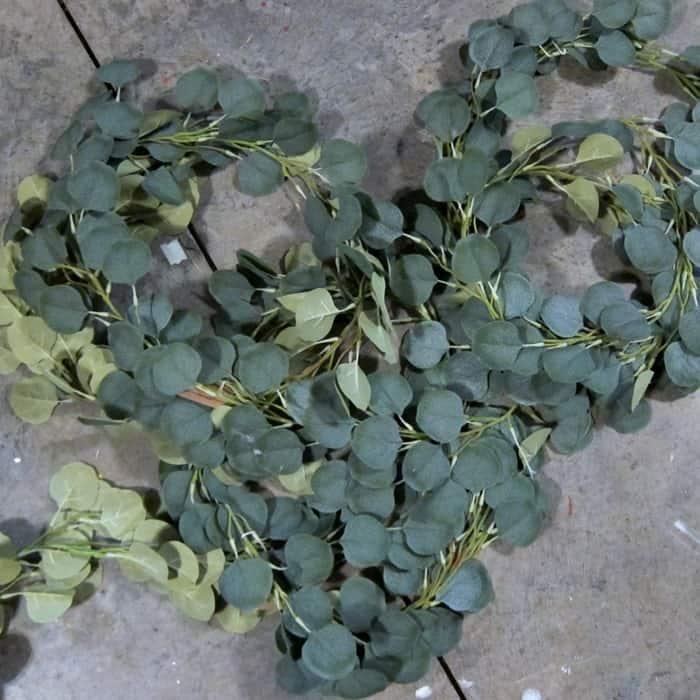 Eucalyptus vines