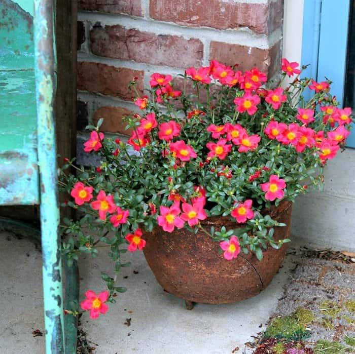 Flowers in rusty pots