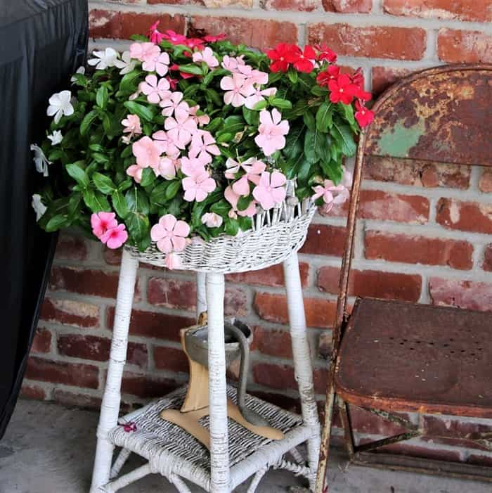 Impatiens flowers in a white wicker stand
