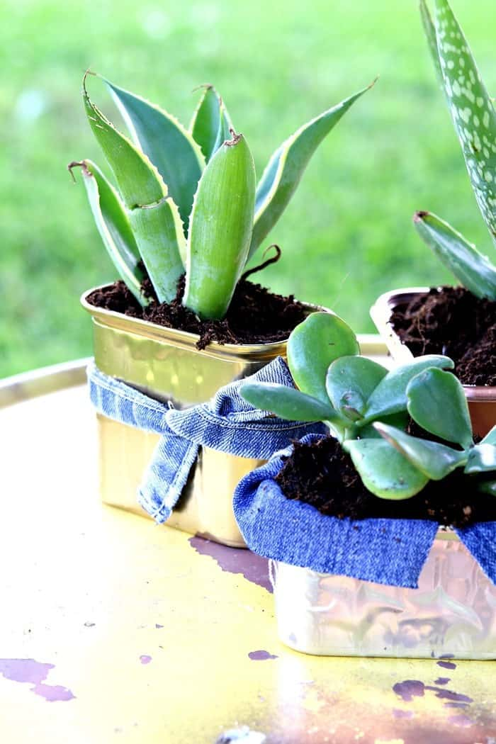 Succulent Container Idea Using Recycled Food Cans & Cartons