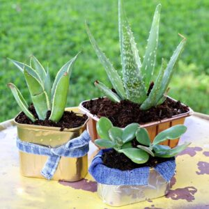make succulent containers using recycled food cans