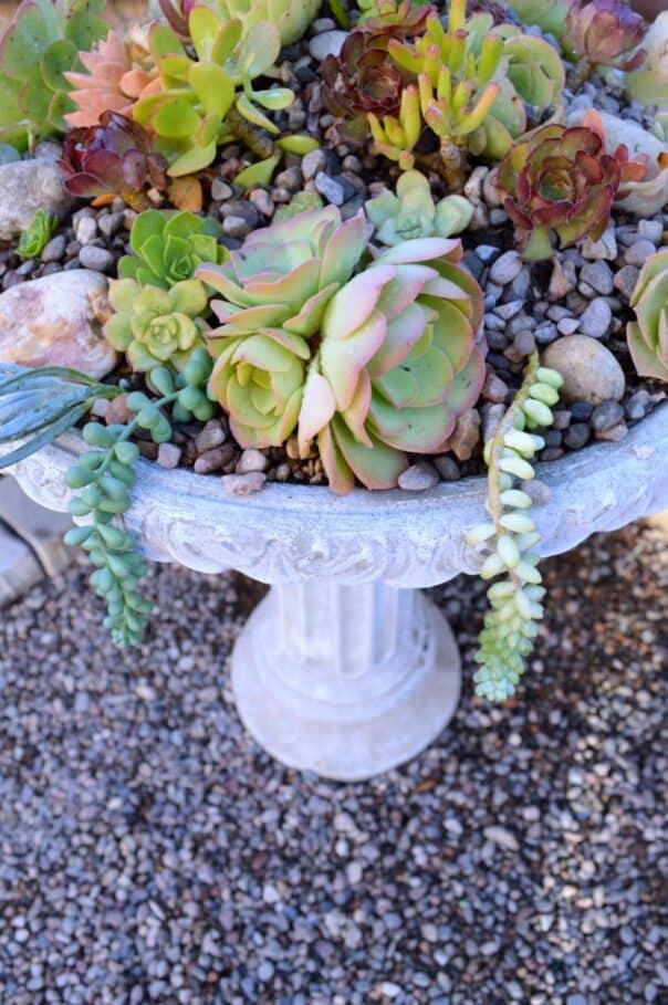 succulent birdbath planter from my uncommon slice of suburbia