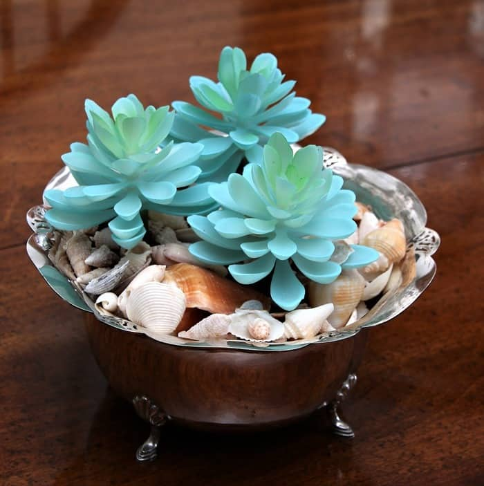 silver plate succulent plant container