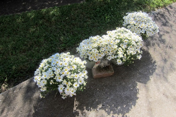 How To Decorate The Porch For Fall With Mums And Vintage Finds (5)